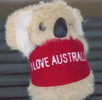 a gift from Dave - a small koala